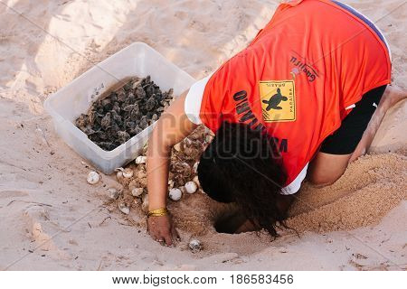 Cabedelo, Paraiba, Brazil - May 15, 2017 - Hawksbill Sea Turtle Hatchlings Being Released To Sea By