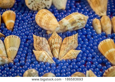 Image of Seashell collection. Many different shells.