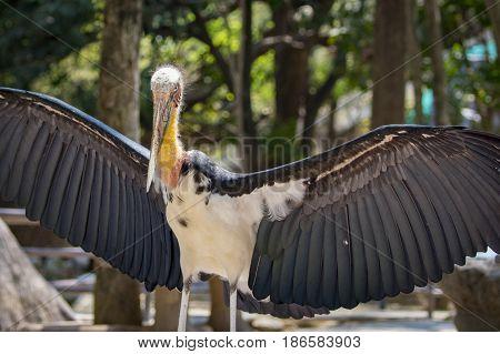 Image of a Lesser adjutant stork. wild animals.
