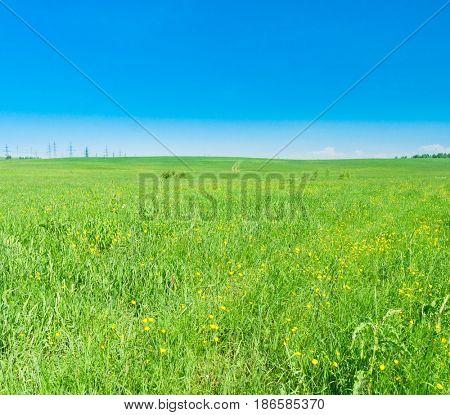 Vibrant Nature Green Plain