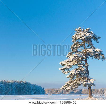 Snowy Lake Frosty Winter