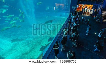 OKINAWA JAPAN - April 20 2017: Okinawa Churaumi Aquarium Okinawa Japan. It was the largest aquarium in the world until it was surpassed by the Georgia Aquarium in 2005.