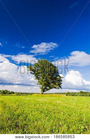Scenic View Field Landscape