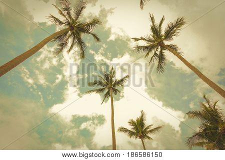 Coconut trees looking up angle against summer sky background - retro vintage tone