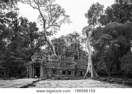 Portrait photo of tree roots growing over ruins of a temple in Siem Reap, Cambodia