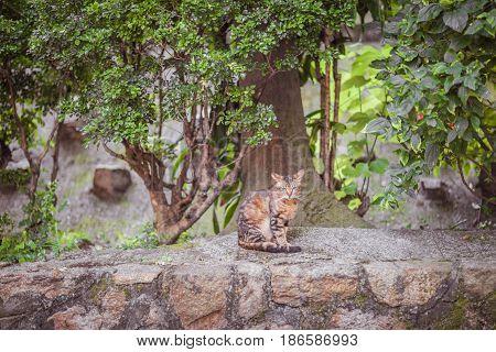 Cat in garden summer, Hong Kong South