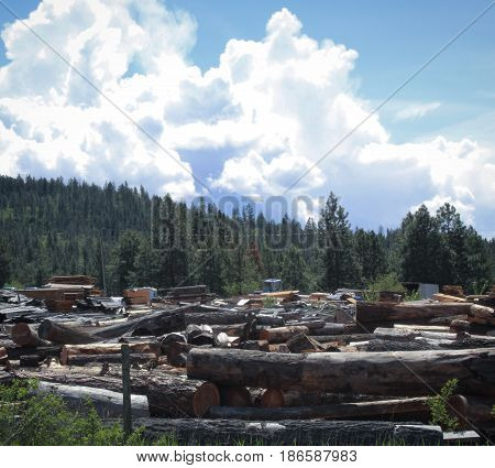 Logs In Industrial Logging Yard