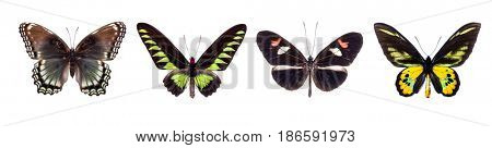 Set of four colorful and beautiful butterflies isolated on white.