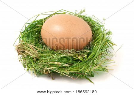 Egg in the nest of green grass isolated on white background.