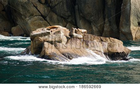 Seals and Sea Lions rest in the sun while waves crash onto the rocks below