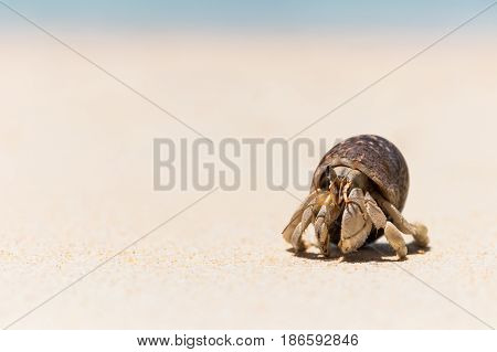 close up Hermit crab on tropical beach