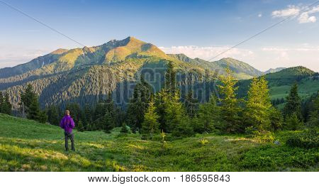 Tourist looking at mountain peak. Landscape panorama with spruce forest in the mountains. Sunny summer morning. Carpathians, Ukraine, Europe. Marmarosh massif