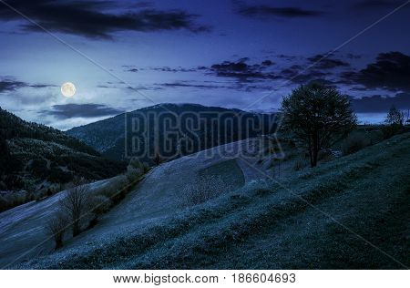 Countryside mountain landscape. trees on a meadow in rural area on beautiful springtime at night in full moon light