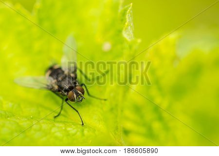Macro of house fly on leaf in garden