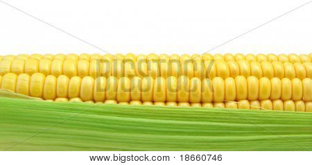 Isolated corn. Element of design.