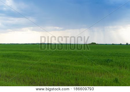 A large storm cloud over a wide green agricultural field. In the distance it rains. Spring landscape.