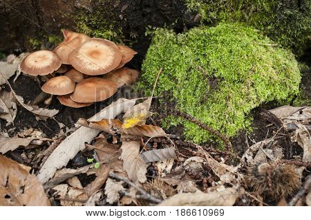 Close up of Mushrooms growing on the underbrush