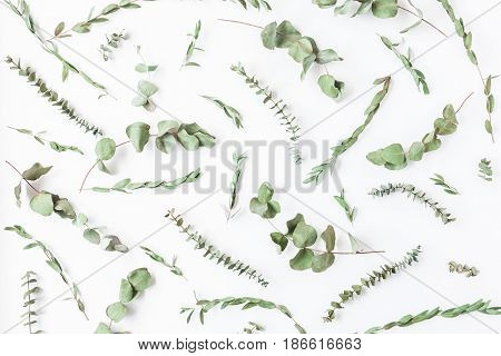 Eucalyptus. Pattern made of eucalyptus leaves on white background. Top view, flat lay