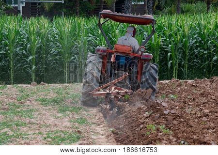 Farmers are plowing corn fields by tractor