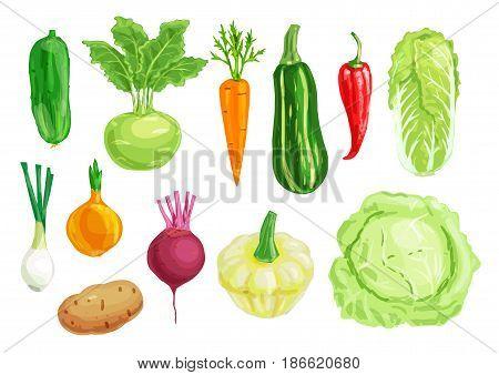 Organic vegetable watercolor illustration of carrot, pepper, cabbage, onion, potato, cucumber, zucchini, beet, kohlrabi, chinese cabbage, pattypan squash hand drawn veggies for vegetarian food design