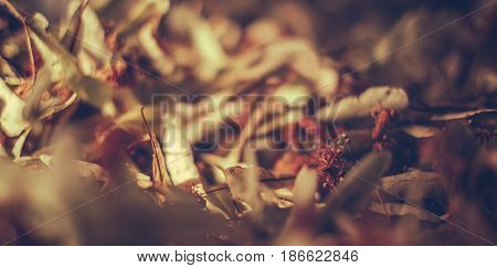 Dried flowers abstract background, closeup view .