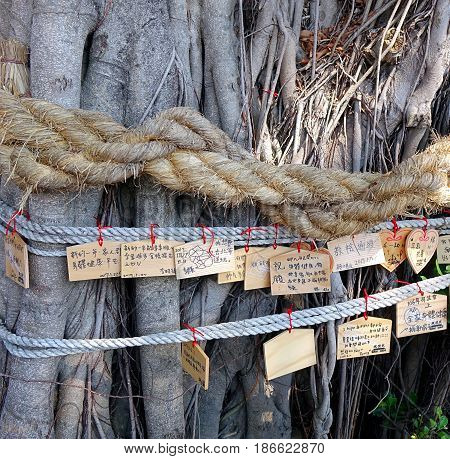 Old Banyan Wishing Tree