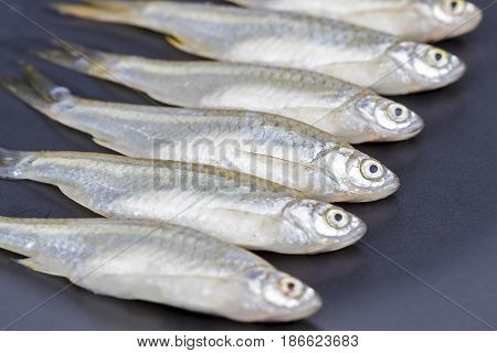 Minnow (apollo Shark) Fish - Scientific Name Is