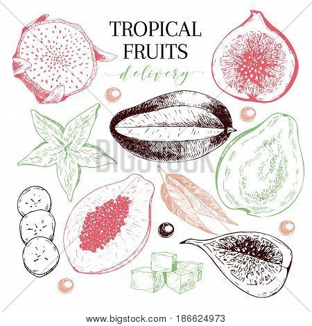 Vector hand drawn exotic fruits. Engraved smoothie bowl ingredients. Tropical sweet food delivery. Pitaya carambola papaya mango fig acai guava. Use for exotic restaurant food party