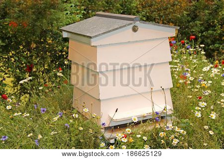 A White Wooden Beehive in a Wild Flower Meadow.