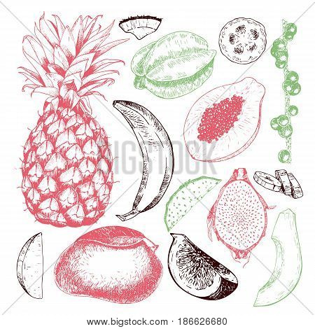 Vector hand drawn exotic fruits. Engraved smoothie bowl ingredients. Tropical sweet food. Pineapple papaya fig mango banana acai pitaya coconut Use for exotic restaurant food party
