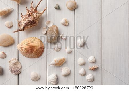 Seashells flat lay, top view on white wood, sea vacation background on wooden planks, copy space