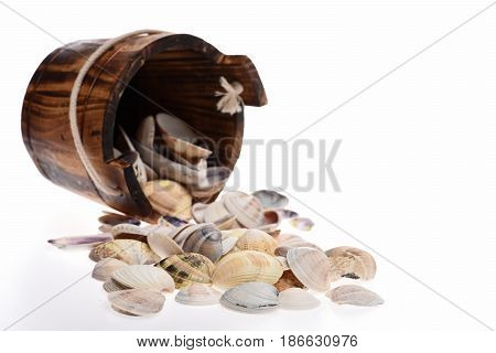 Bucket With Clam Mollusk Shells Isolated On White