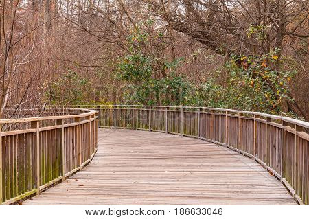 The Boardwalk and thicket of bare trees in the Piedmont Park in autumn day Atlanta USA