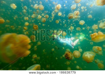 Underwater photo of woman diving with endemic golden jellyfish in lake at Palau. Snorkeling in Jellyfish Lake is a popular activity for tourists in Palau.