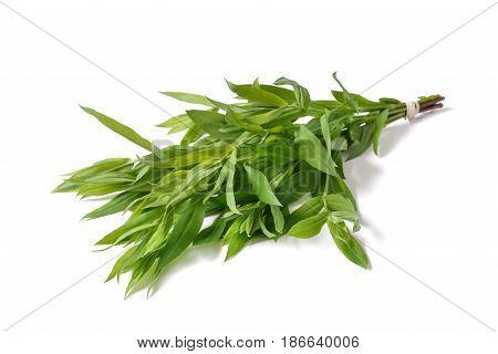 Bladder Campion Plants