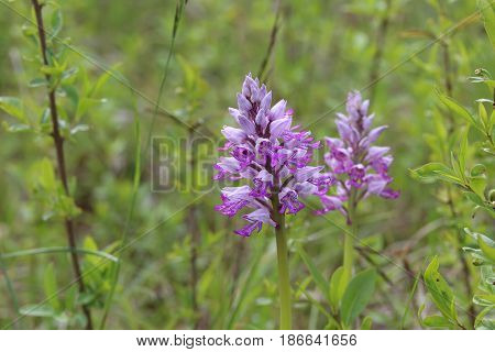 Wild orchid / Very beautiful and rare flowers