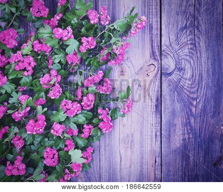 bouquet of hawthorn with pink inflorescences and green leaves on a gray wooden background empty space on the left