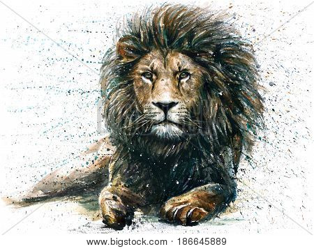 Lion, animals, watercolor, wild, cat, illustration, graphic, wildlife