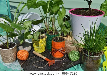 Vintage still life with cute home plants. Gardening concept with flowerpots, houseplants, tools and planting supplies