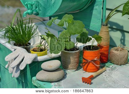Still life with garden and house plants on the table by the old hand washing sink. Gardening concept with flowerpots, houseplants, tools and planting supplies