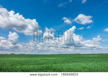 Spring Or Summer Landscape With Green Meadow And Blue Sky