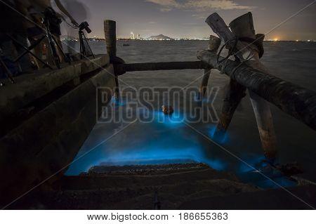 Marine Plankton glow in the dark in Thailand bioluminescence