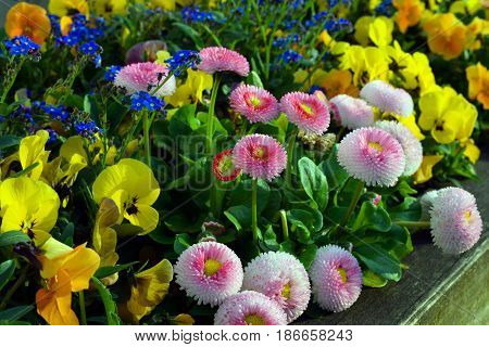 Colorful spring flowers blooming outdoors. Horizontal image.