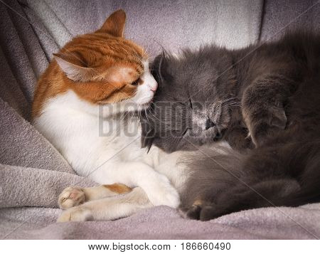 The tenderness the love of two different cats