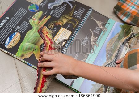 ZHONGSHAN CHINA-May 14:kid checking a Giganotosaurus toy against a book with details of the same dinosaur on May 14 2017.