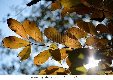 A fall day viewed thru the leaves