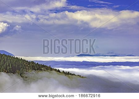 View of inversion landscape with spruce forest