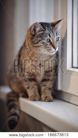 The striped cat with green eyes sits on a window sill.