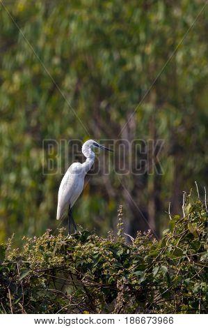 Image of egret on tree on nature background. Wild Animals. Bird.
