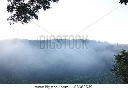 fog floating cover banana tree and mountain beside river